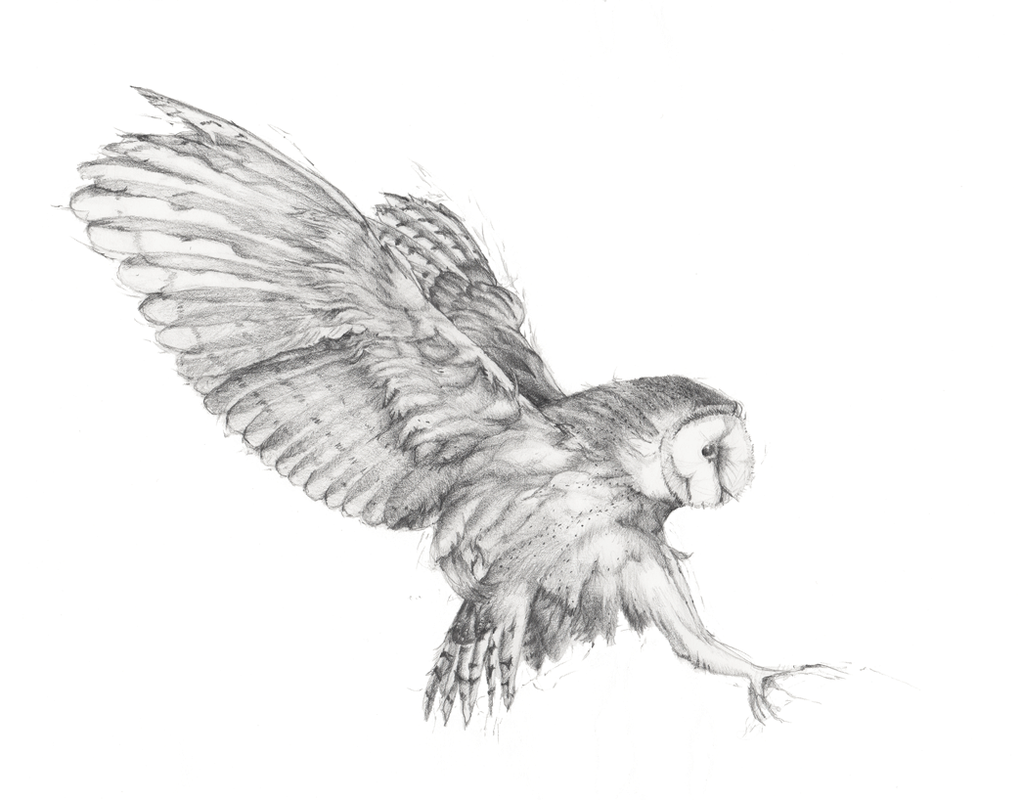 WhOo? (Owl drawing, graphite on paper, © Melinda Nettles 2015.)