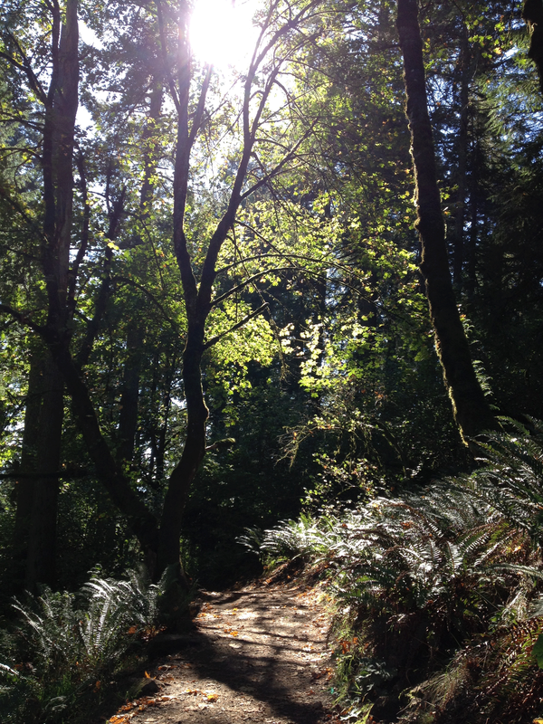Photo of the path up through the forest of ferns and maples and Douglas Firs, on the way to Spencer's Butte, Eugene, Oregon.