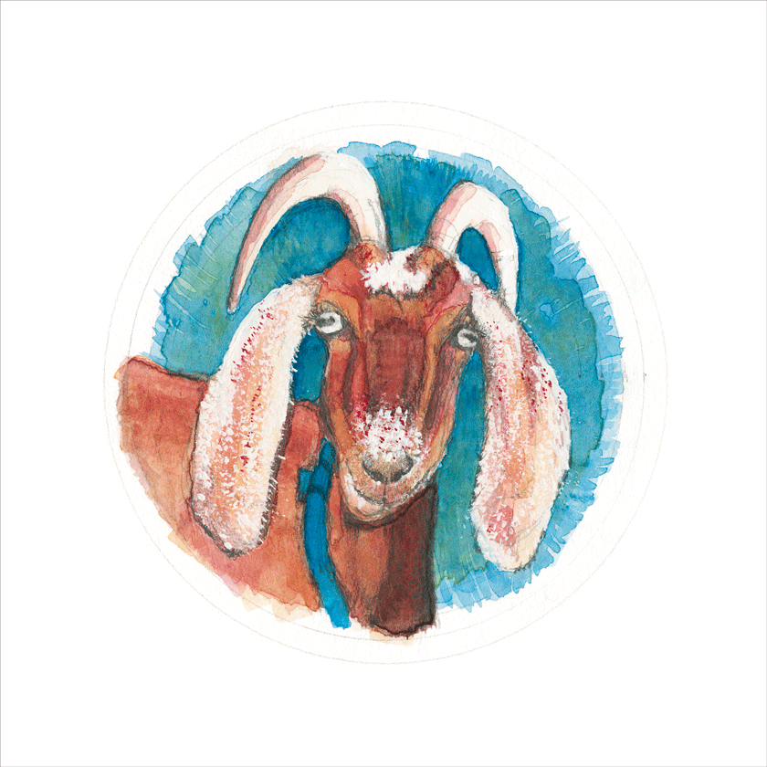 Painting of a goat, on a blue background.  Gouache and graphite.  © 2016 Melinda R. Nettles