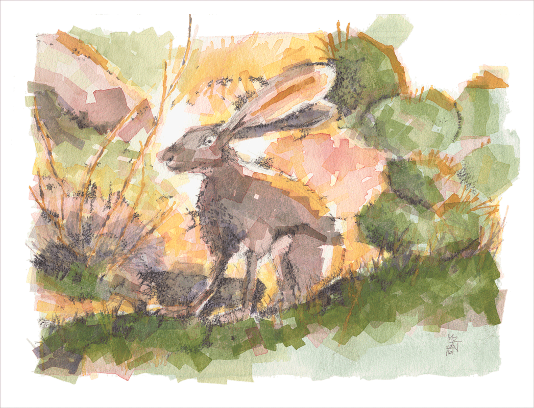 Painting of a jackrabbit with some prickly-pear cactus and suchlike.  Watercolor and graphite.  © 2016 Melinda R. Nettles